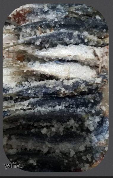 סרדינים כבושים במלח_מתכון של המטבח של יפה רייפלר מתכונים